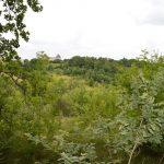 Saussignac (24) › Forêt